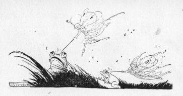 frogs&fairies
