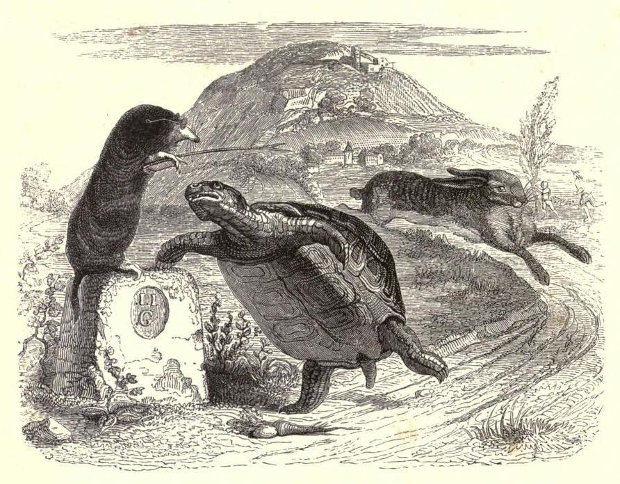 Grandville_tortoise